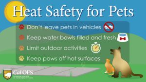 Heat Safety for Pets