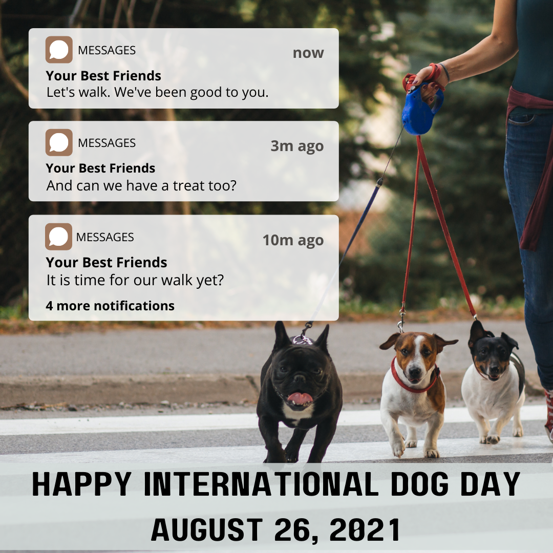 """Happy International Dog Day! Give your dogs special treats today. [ID Description for ALT IMAGE: Blurred Outdoor Background: A person walking three small dogs across the street. On your left: Three texts with white background. """"Now"""" """"Your Best Friends"""" (next) """"Let's walk. We've been good to you."""" 3m ago """"Your Best Friends"""" """"And can we have a treat too?"""" 10m ago """"Your Best Friends"""" """"It is time for our walk yet?"""" """"4 more notifications"""" End of ID Description]"""